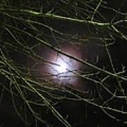 Autumn Moon Peeks Through The Branches Art Print