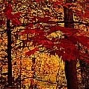 Autumn Mosiac  Art Print by Dianne  Lacourciere