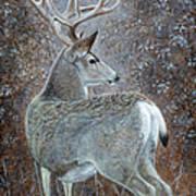 Autumn Muley Art Print