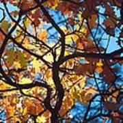 Autumn Oak Art Print