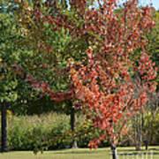 Autumn Oak Tree  Art Print