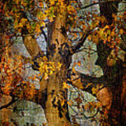 Autumn Oaks In Dance Mode Art Print