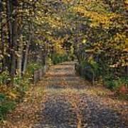 Autumn On Bike Trail  Art Print