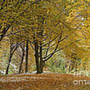 autumn on Moenchsberg in Salzburg Art Print