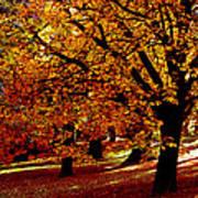 Autumn On Wombat Hill II Art Print