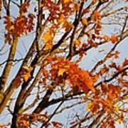 Autumn Orange Art Print by Guy Ricketts