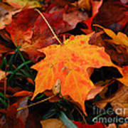 Autumn Palette  Art Print
