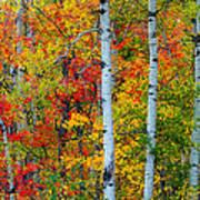 Autumn Palette Art Print by Mary Amerman