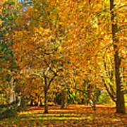Autumn Park Art Print