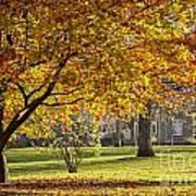 Autumn Park Art Print