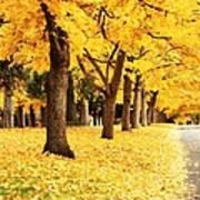 Autumn Perspective Art Print