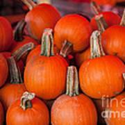 Autumn Pumpkins Art Print