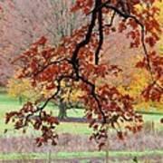 Autumn Rainbow Art Print by Todd Sherlock
