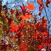 Autumn Reach  Art Print