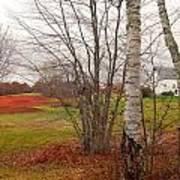 Autumn Red Field Maine  Art Print