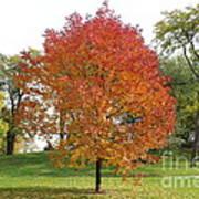 Autumn Red Tree Art Print