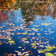 Autumn Reflections Art Print by Bill Wakeley
