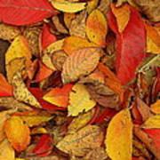 Autumn Remains Art Print