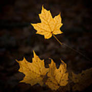 Autumn Remnant Art Print