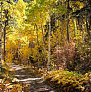 Autumn Road - Tipton Canyon - Casper Mountain - Casper Wyoming Art Print