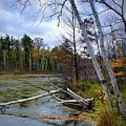 Autumn Scene Of Along The Shore Of The Platte River In Michigan Art Print