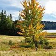 Autumn Shores Of Maine Art Print by Lena Hatch