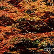 Autumn Solarisation 1 Art Print