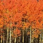 Autumn Splender  Art Print