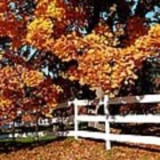 Autumn Splendor 10 Art Print