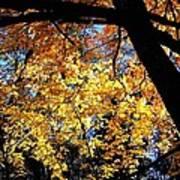 Autumn Splendor 3 Art Print