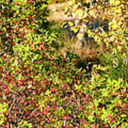 Autumn Splendor 7 Art Print