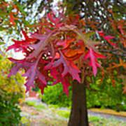 Autumn Splendor Art Print by Mamie Thornbrue