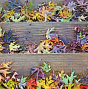 Autumn Steps Art Print by William Schmid