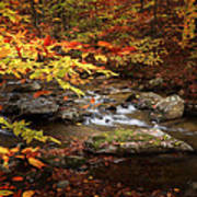 Autumn Stream Square Art Print
