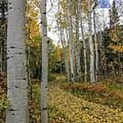 Autumn Stroll Art Print