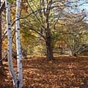 Autumn Stroll  Art Print by Kimberly Maiden