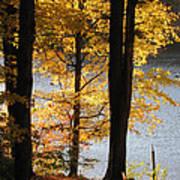 Autumn Sunlight Art Print