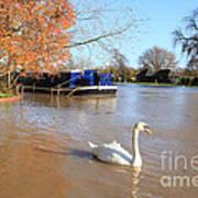 Autumn Swan Art Print