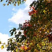 Autumn To Perfection Art Print