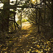 Autumn Trail In Woods Art Print