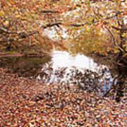 Autumn Tranquility Art Print