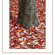 Autumn Tree Poster Art Print
