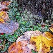 Autumn Tree Trunk  Art Print