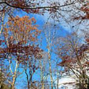 Autumn Trees And Heaven Art Print