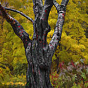Autumn Trees3 Art Print