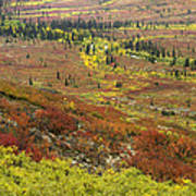 Autumn Tundra With Boreal Forest Art Print