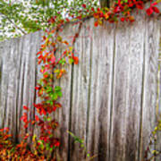 Autumn Vines Art Print