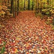 Autumn Walk In Ohio Art Print
