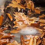 Autumn Water Eddy Art Print
