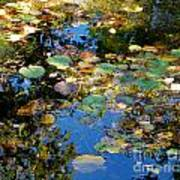 Autumn Water Lily Reflections  Art Print